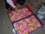Little Pink Chicks