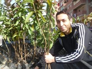 MB Helwan Trees