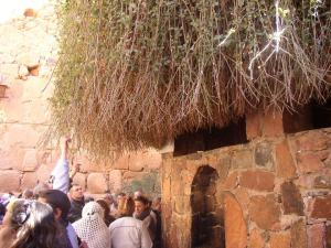 The Burning Bush at St. Catherine's Monastery