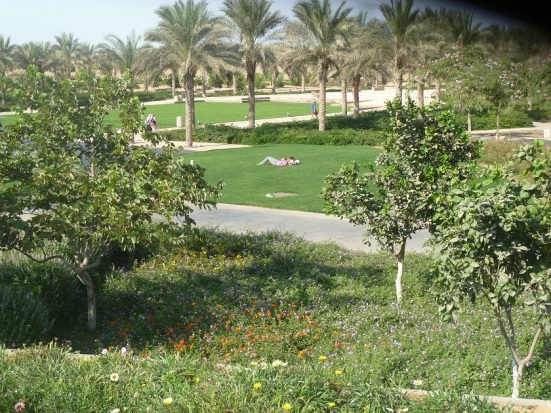 Besides modern buildings, AUC has also created a modern oasis